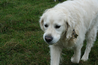 Photo: Milo Golden made a flying visit... a gorgeous boy from classes a few years back.