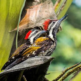 by Rajarshi Das - Animals Birds
