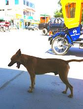 Photo: Los Organos, Peru.  June 2012.