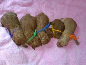 Photo: Honey´s Fünflinge! 5 wunderschöne und gesunde Jungs!