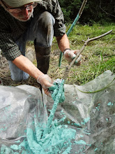 Photo: Alex paints the stems of the planted trees to reduce beaver damage.  Sand was mixed with the paint.