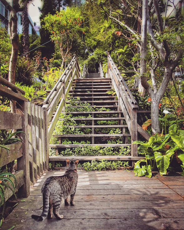 House cats patrol the wooden stairs on Telegraph Hill.