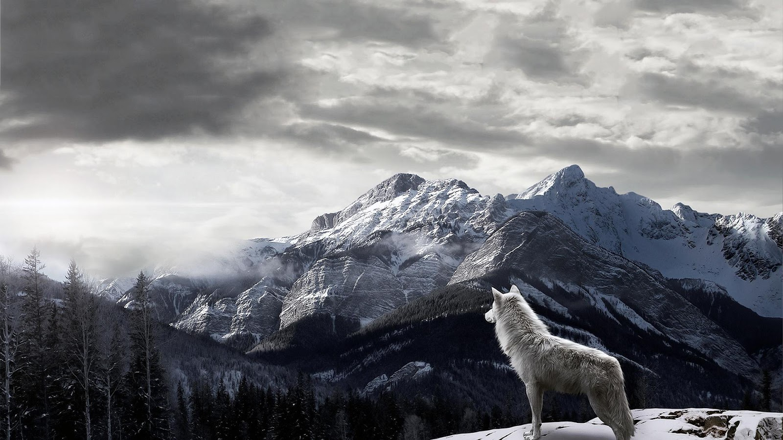 Wolf Wallpaper HD