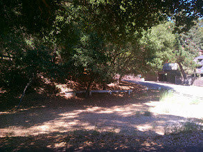 Photo: All the eucalyptus were eradicated from this corner and the oaks are now thriving.