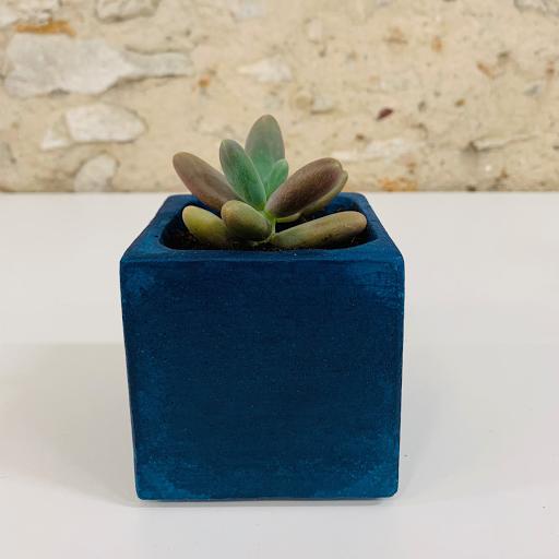 pot en béton coloré bleu pétrole avec succulente