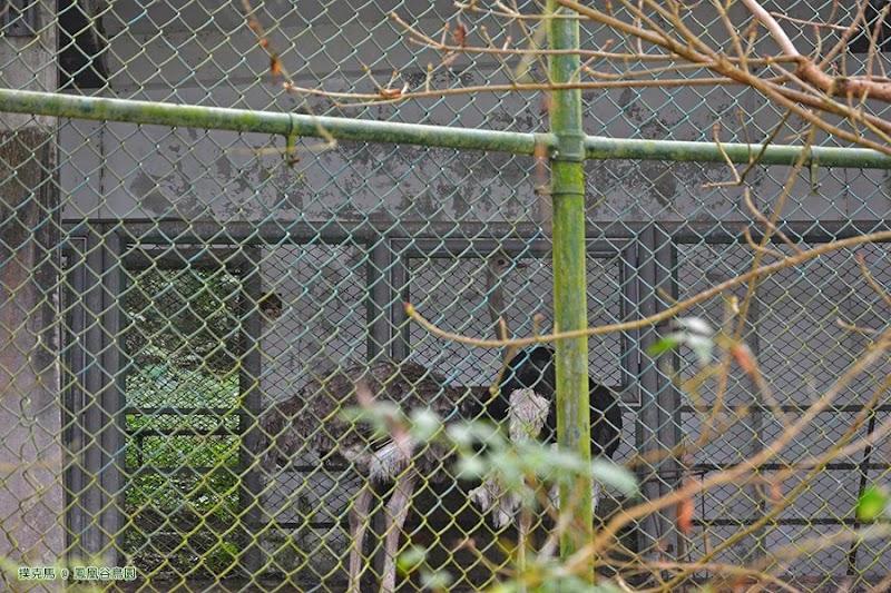 鳳凰谷鳥園猛禽區