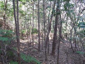 廃林道はあるが…