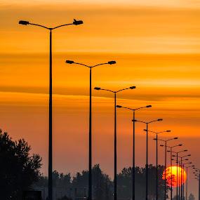 Bird by Nenad Borojevic Foto - Transportation Roads (  )