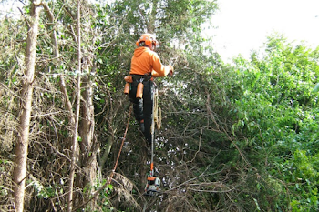 tree surgery by Wayne in west midlands