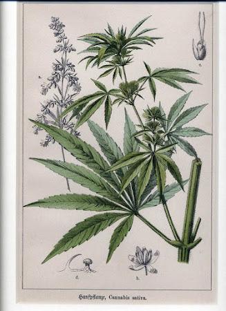 History of Cannabis in Medicine