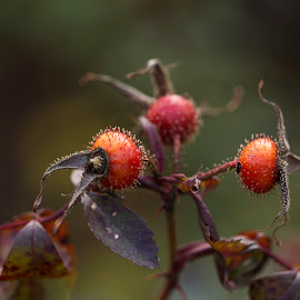 by Lori Rider - Nature Up Close Other plants (  )