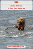 #Alaska #Itinerary 10 Days // Grizzly Bear in Valdez