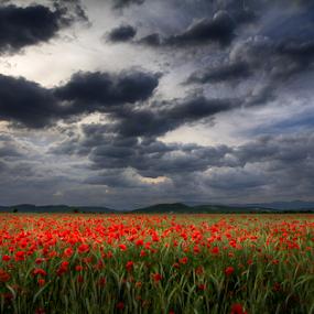 Heaven on earth by Adrian Urbanek - Flowers Flowers in the Wild