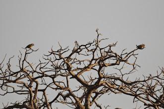 Photo: senegal parrots