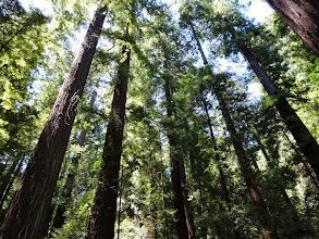 Photo: More trees