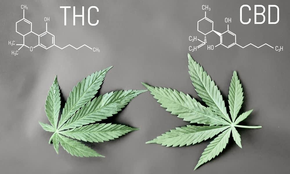 Satori Care Naturals I CBD Edibles vs THC Edibles