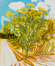 """Photo: Tansy Drawing, pencil and acrylic on mylar, 36"""" x  30"""", 2012"""