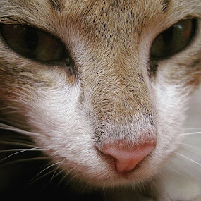 When I miss you by Sengkiu Pasaribu - Animals - Cats Portraits