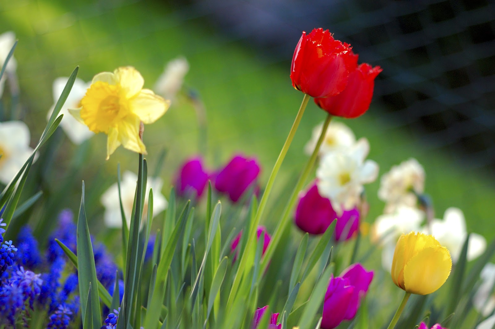 File:Colorful spring garden. ...