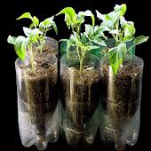 Tải Game chỉ đơn giản là hydroponics