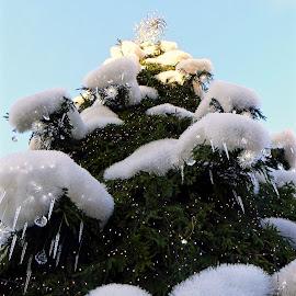 Christmas by Vygintas Domanskis - Public Holidays Christmas ( kaunas, snow, christmas tree, tree, lithuania, christmas )