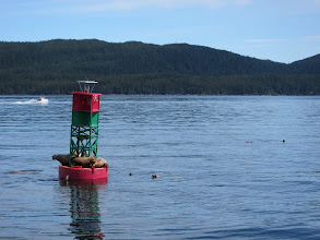 Photo: How many sea lions can you fit on a buoy?