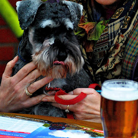 Mines   a  pint by Gordon Simpson - Animals - Dogs Puppies
