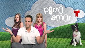 Perro Amor thumbnail