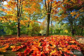 Photo: L'automne en Paintography