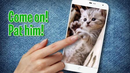 Pat a Kitten 1.0 screenshot 129772