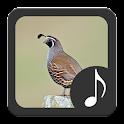 Quail Sounds icon