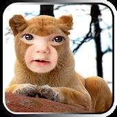 Lion photo masks
