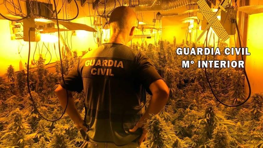 Imagen de archivo de un Guardia Civil en una plantación.