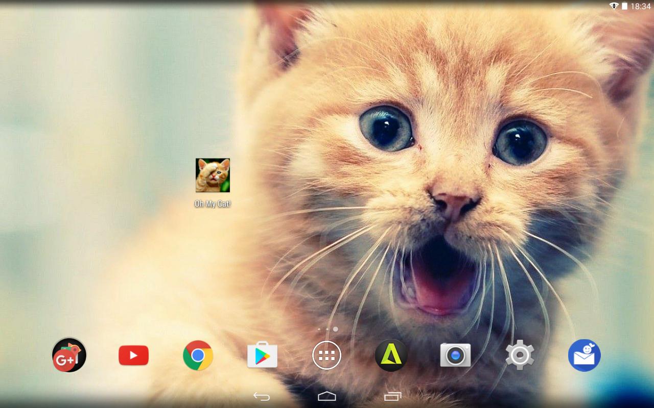 Gatos Fondos Y Fotos Graciosas Apl Android Di Google Play