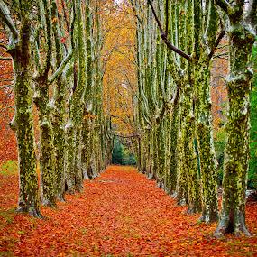 autumn in Provence by Dmitry Samsonov - Landscapes Forests ( color, colors, landscape, portrait, object, filter forge )