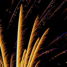 FEATHERS by Jennifer  Loper  - Abstract Fire & Fireworks ( red, blue, yellow, black, purple, july 4, fireworks )