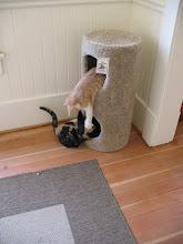 Photo: Get outta my cat tree!