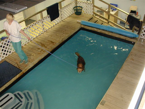 Swimming can be used for fitness and conditioning as well as for rehabilitation of neurological and orthopedic patients