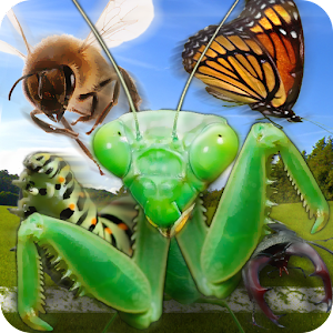 Insect Race for PC and MAC