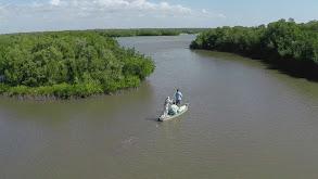 Paddleboarding the Everglades thumbnail