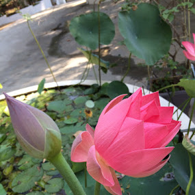 Flowe and the bud by Indhumathi Karthikeyan - Instagram & Mobile iPhone