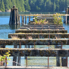 Pylons for a old warf by Charlene Cadman - Buildings & Architecture Decaying & Abandoned