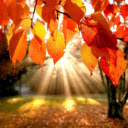 Autumn Wallpaper HD New Tab Theme
