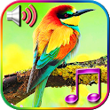Birds Sound Ringtones icon