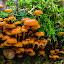 With my Friends by Bob Minnie - Nature Up Close Mushrooms & Fungi ( mushrooms, orange, woods )