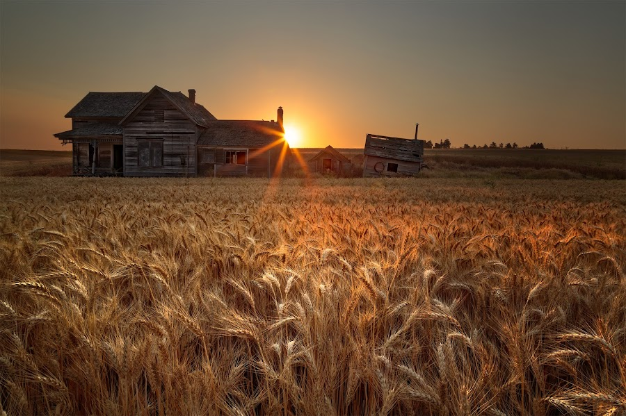 It's Harvest time!!! by Salim Waguila - Landscapes Prairies, Meadows & Fields ( wheat, palouse, barn, prairy, sunrise )