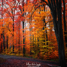 Photo: Fall 2012 / Personal vision Have a nice Weekend!  #fallphotos #autumnphotography #naturephotography #photography #forestphoto   See more at www.naturephotographie.com
