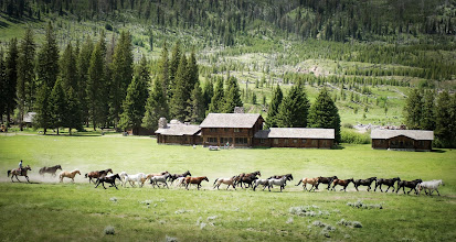 Photo: Running Wild, Across the Meadow  I was just returning from one little hike-adventure and then I stumbled onto another one! Every day, about this time, a few dozen horses from the ranch run free across the meadow to graze in distant pastures. They stay cooped up inside the corral for most of the day, so they love the chance to run free. The cowboy rides behind them, cracking his whip. It echoes through the valley and everything seems right in the world.
