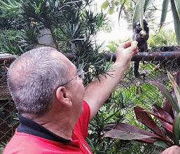 Photo: A macacada gosta mesmo é de banana!