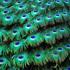 by Mukesh Chand Garg - Nature Up Close Other Natural Objects (  )